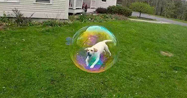Pes v bubline