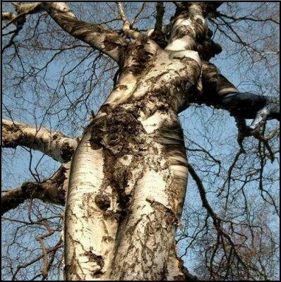 strom ktorý vyzerá ako nahá postava